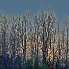 Hevey Trees A1 by Steve Walser