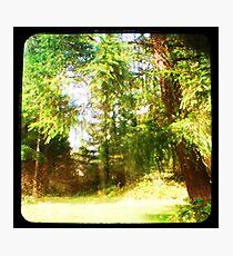 My Backyard TTV Photographic Print