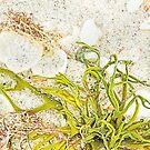 Sarasota Still Life - Glorious Green by Marilyn Cornwell