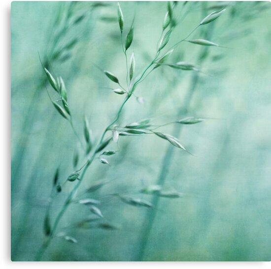 Grassland by Priska Wettstein