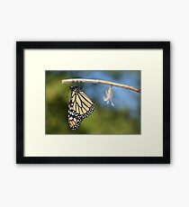 Monarch Butterfly & Chrysalis Framed Print