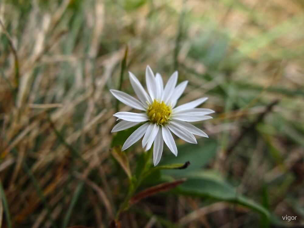 Pretty little mystery flower by vigor