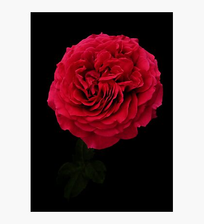 Deep red Photographic Print