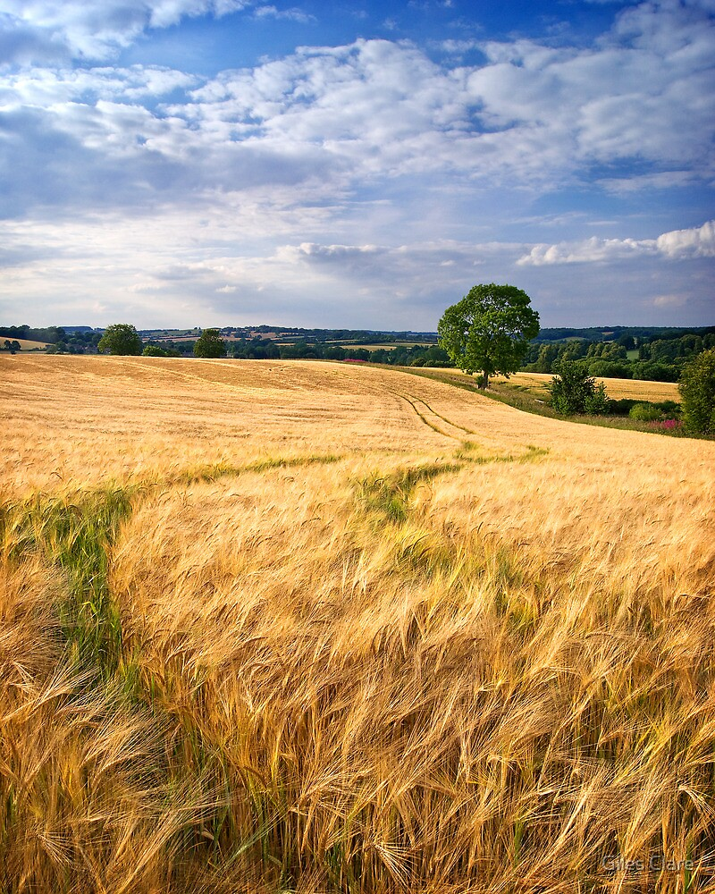 Summer's Bounty, The Cotswolds, England by Giles Clare