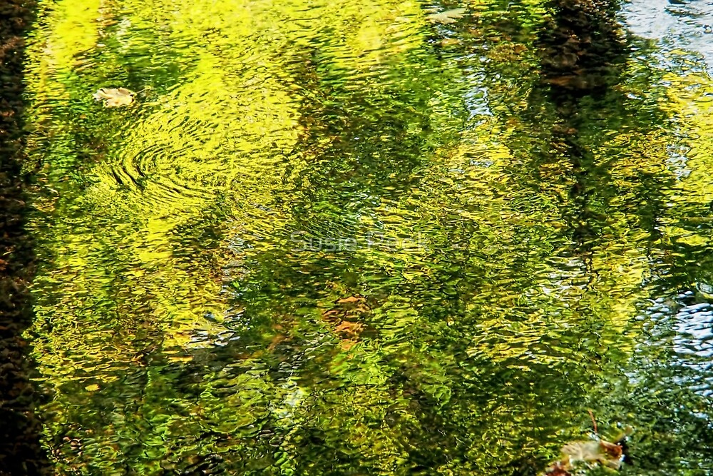 Sidford River Reflections 2 by Susie Peek