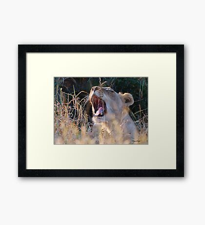 SUNDOWNER CATCH - The Kruger National Park South Africa Framed Print