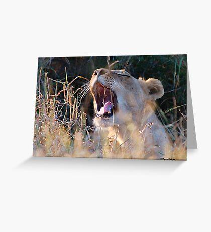 SUNDOWNER CATCH - The Kruger National Park South Africa Greeting Card
