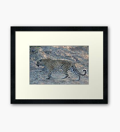 SO CLOSE ! The Kruger National Park, South Africa Framed Print