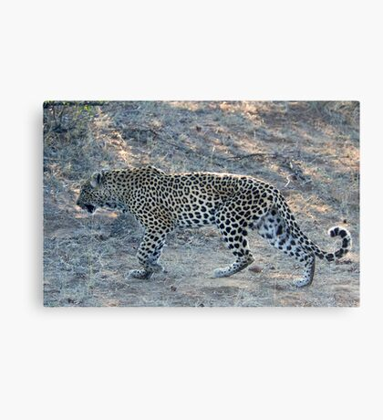 SO CLOSE ! The Kruger National Park, South Africa Canvas Print