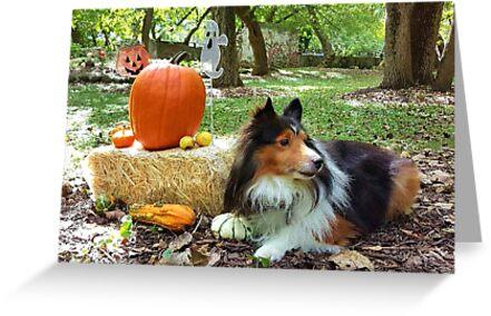 Sheltie With Pumpkins by jkartlife