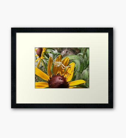 The Itsy Bitsy Spider Climbed Up The Black-Eyed Susan... Framed Print