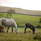 Drybarrows mare & foal - Eden Valley by Fleur Hallam
