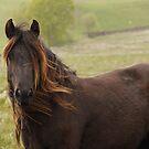 Windswept - Greenholme mare by Fleur Hallam