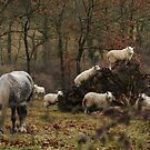 Globetrotter Quicksilver with tree climbing sheep! by Fleur Hallam