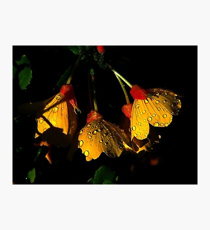Night Lights 2 Photographic Print