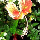 Hanging Hibiscus Flower by glennc70000