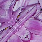 Flowerman by KarDanCreations