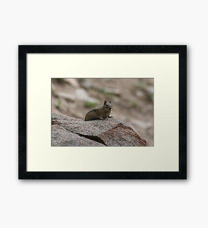 Little Creature In A Big World Framed Print