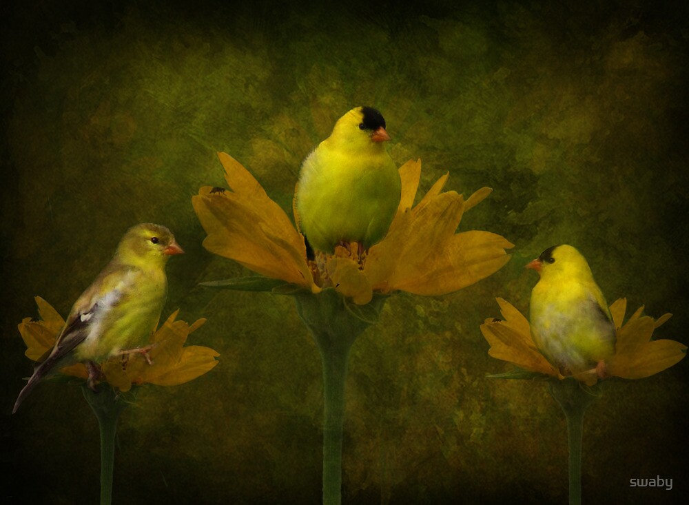 A Goldfinch Family by swaby