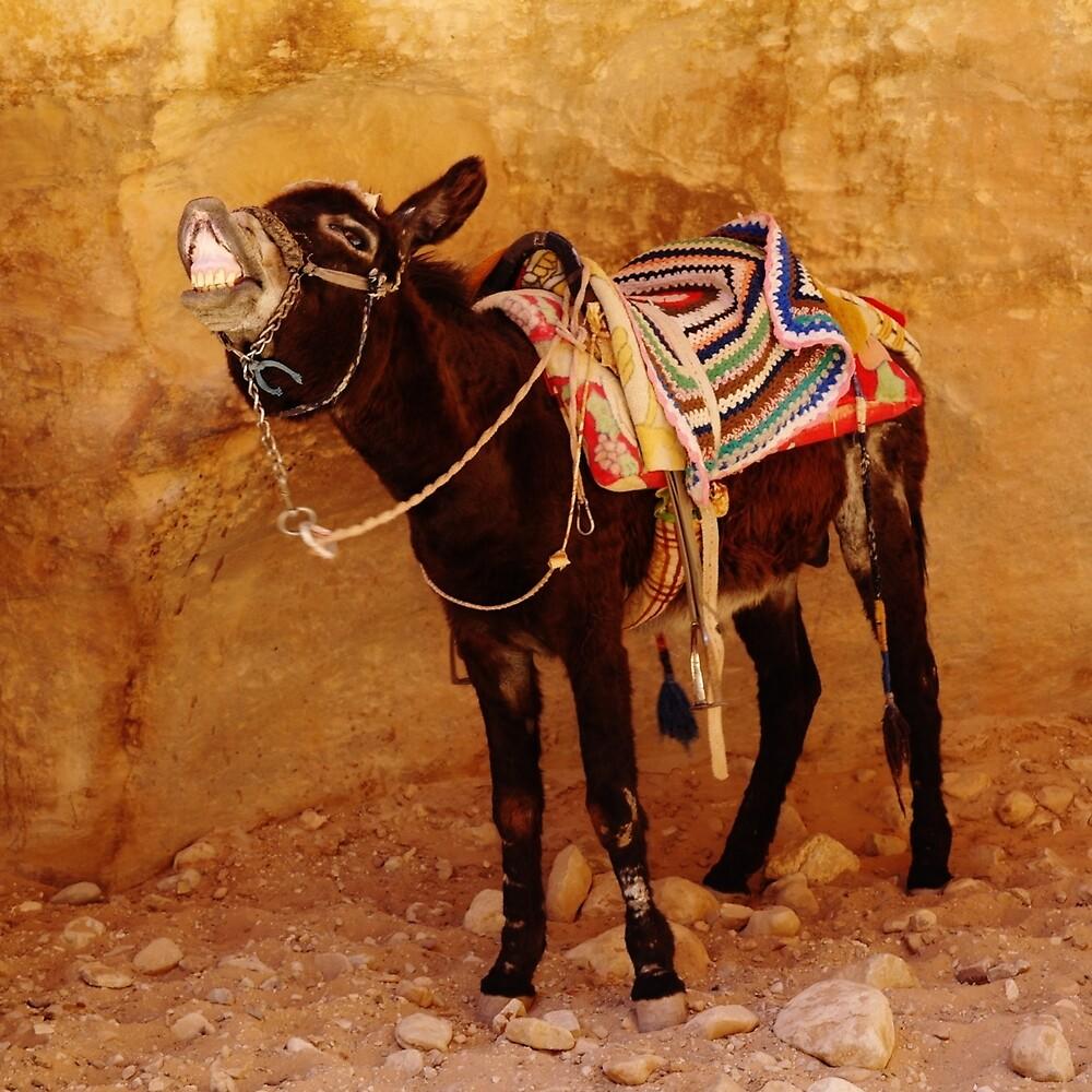 Donkey by noelleabbott