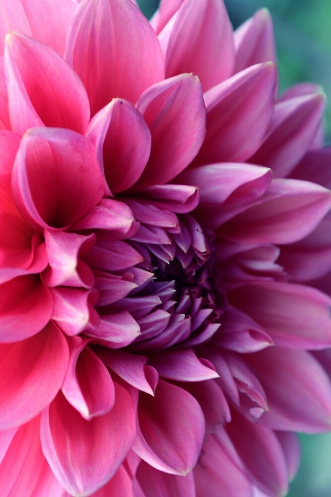 flower power by Mistymi