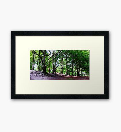 Sharpenhoe Clappers Framed Print