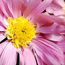 Pinkbloom by KarDanCreations
