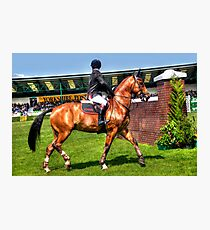 Gorgeous horse Photographic Print