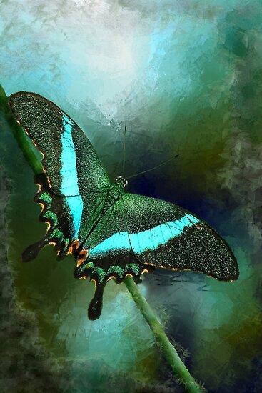 Emerald Peacock Swallowtail by Renee Dawson