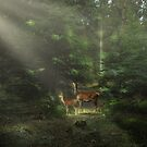 In the spotlight by Lifeware