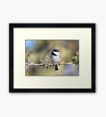 Cedar Rose Chickadee Art Framed Print