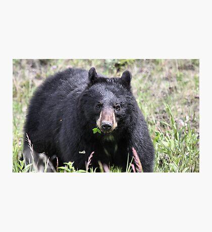 Salad Baaar (American Black Bear) Photographic Print