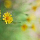 Bee's Eye View by Linda Trine