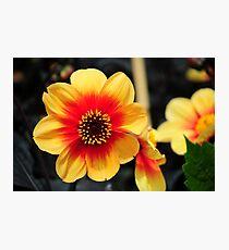 Eden Project flower Photographic Print