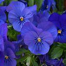 Brilliant Blue. by Lee d'Entremont