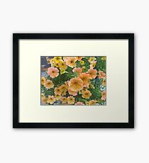 Pink and Yellow petunia Flowers Framed Print