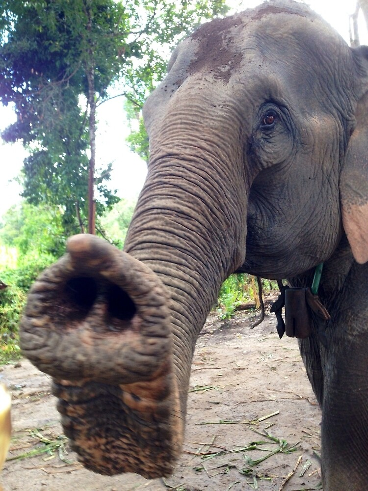 Elephant friend - Chiang Mai, Thailand   by ElasticEARTH