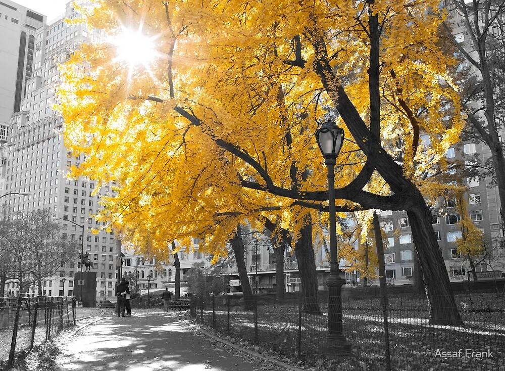 Central park - New York by Assaf Frank