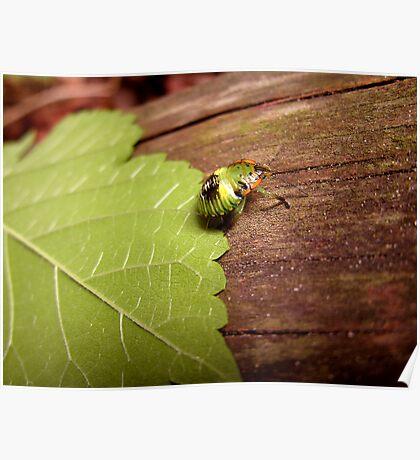 Weird and Green Bug Poster