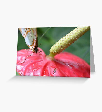 Green Malachite on a flower Greeting Card