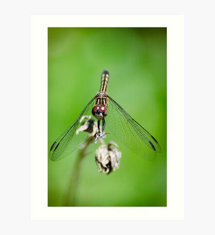 Female Blue Dasher Dragonfly Art Print