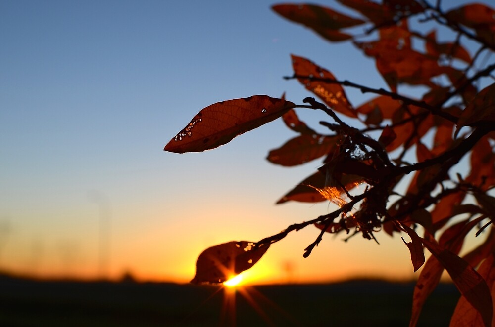 Sunrise in the leaves by mitchee1969