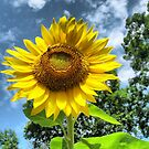 You Are My Sunshine ~ Make-A-Wish-Sunflowers by Debbie Robbins