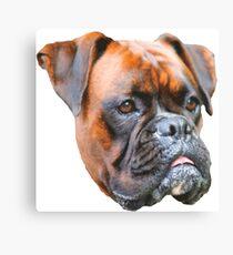 Germany boxer dog  Canvas Print