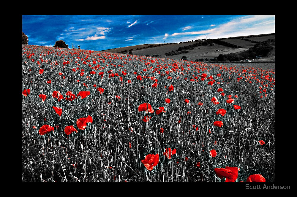 Blue Skys and Red Poppies II by Scott Anderson