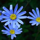 Blue Greetings by Angele Ann  Andrews