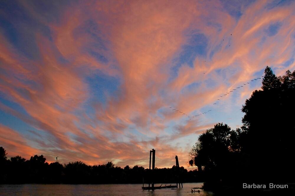 Sunset Flight by Barbara  Brown