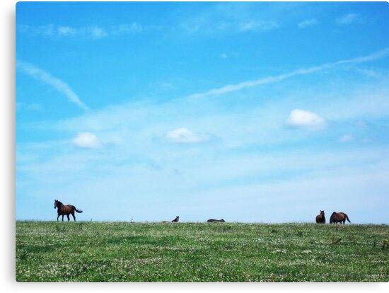 Dumb-ass Horses, Cheshire by robomeerkat
