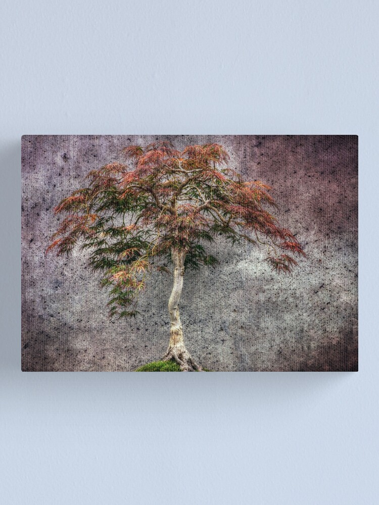 Alternate view of Japanese Maple Canvas Print