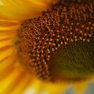 Sun(f)lover by andreaminerdo